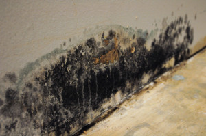 business mold cleaning in nj